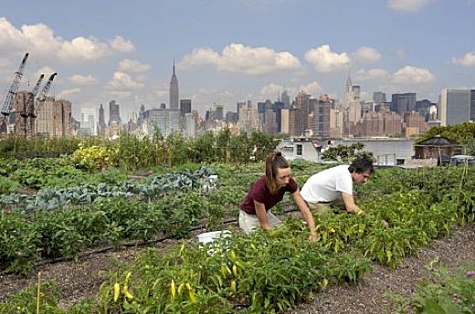 NEWYORK FARM
