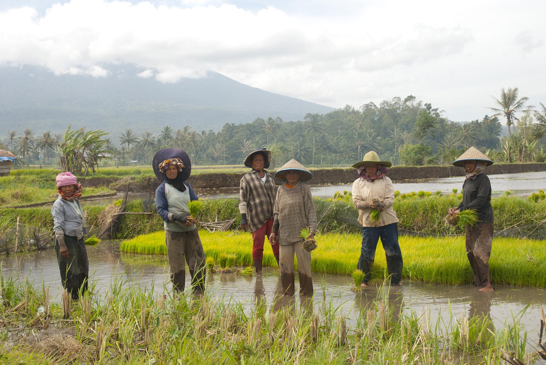 Camperoles en la vessant del mont Merapi.